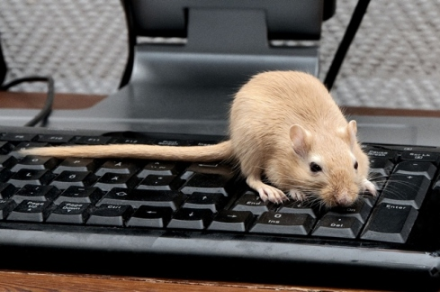 Mouse-on-keyboard.jpg